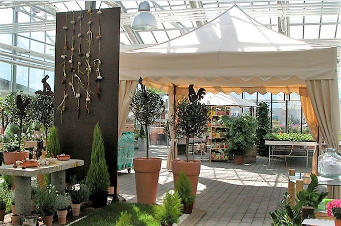 Royal Folding Tent – Ecru in colour with scalloped roof and elegant corner curtains in garden centre display setting